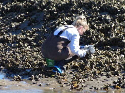 Shelby Butz collecting oysters
