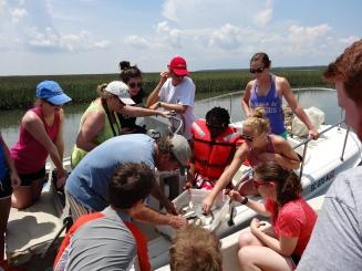 Examining the trawl