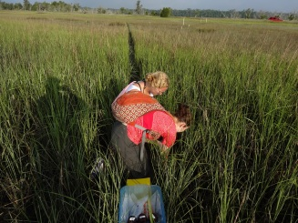 Working in the Spartina